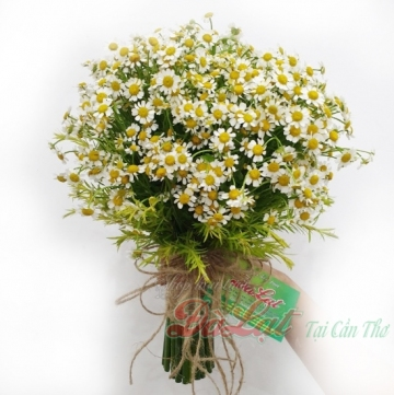 Hoa cúc cưới