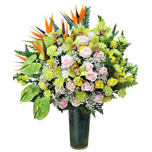 hoa vip