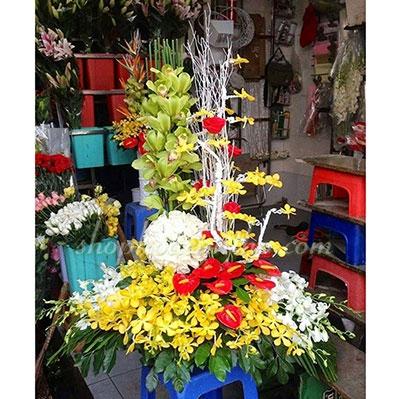 Hoa chúc mừng - Hồng môn và lan