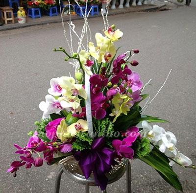 Hoa chúc mừng - Lẳng hoa Lan hồ điệp