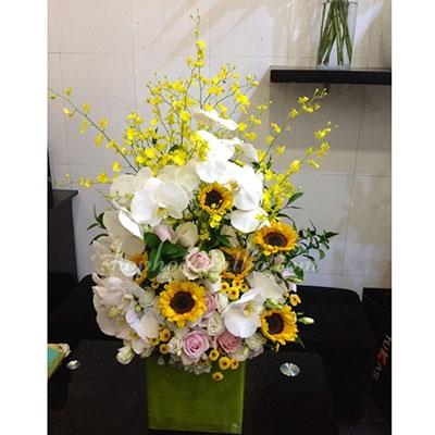 Hoa chúc mừng - Hướng dương và lan hồ điệp