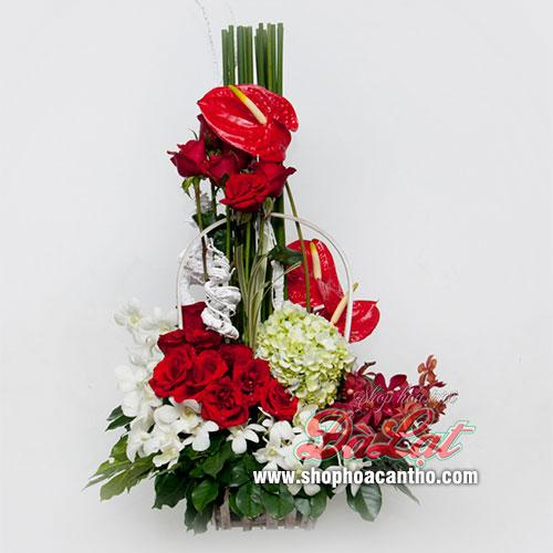 Hoa mừng giáng sinh sắc đỏ lung linh