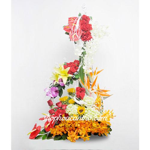Hoa giáng sinh Lãng mạn