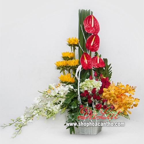 Hoa mừng giáng sinh Xinh tươi
