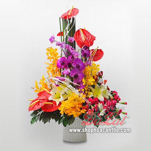 Hoa giáng sinh lung linh sắc thấm